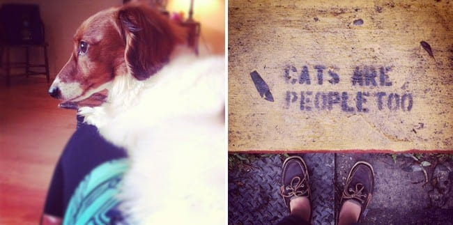 Collage of two images showing a dog and a sign with a woman\'s feet