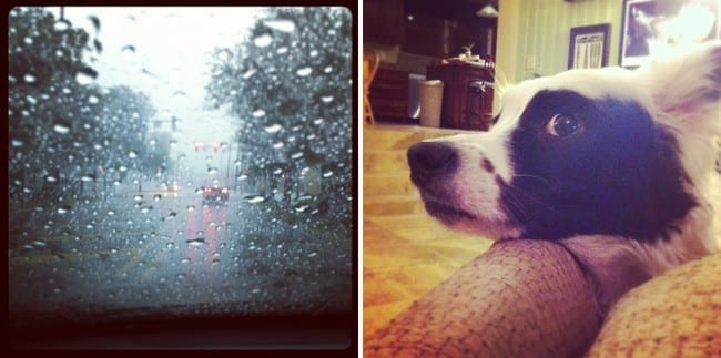 Collage of two images of rain drops on a window and dog laying head down