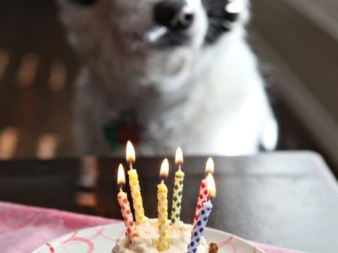 Dog sitting in front of pupcake with lit birthday candles