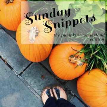 In a semi-weekly tradition, I share an update on my personal life, including all the pumpkins (hence, Sunday Snippets: The Pumpkin Wonderland Edition) and other fun snippets from real life this week.
