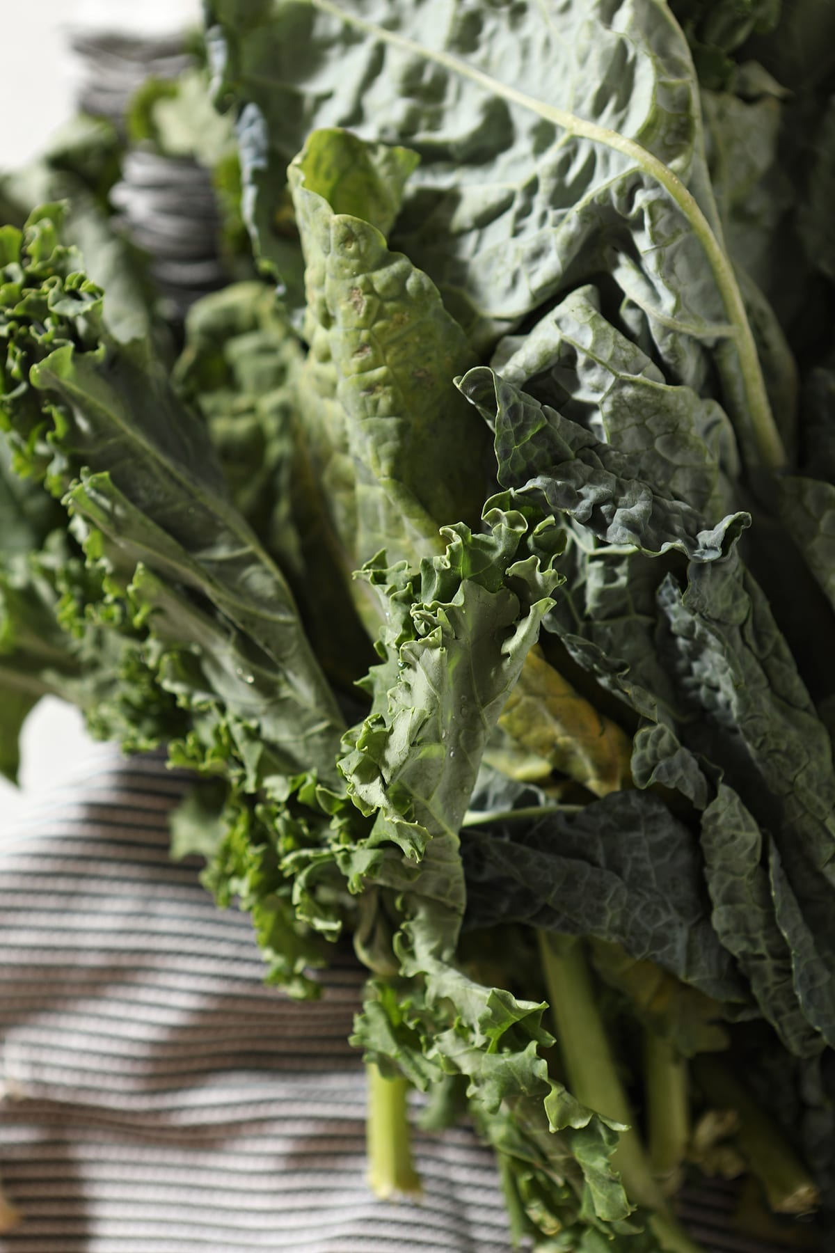 Close up of fronds of fresh kale