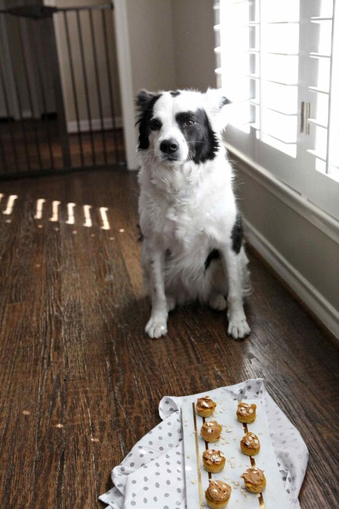 A black and white border collie sits next to a marble tray holding homemade dog treats