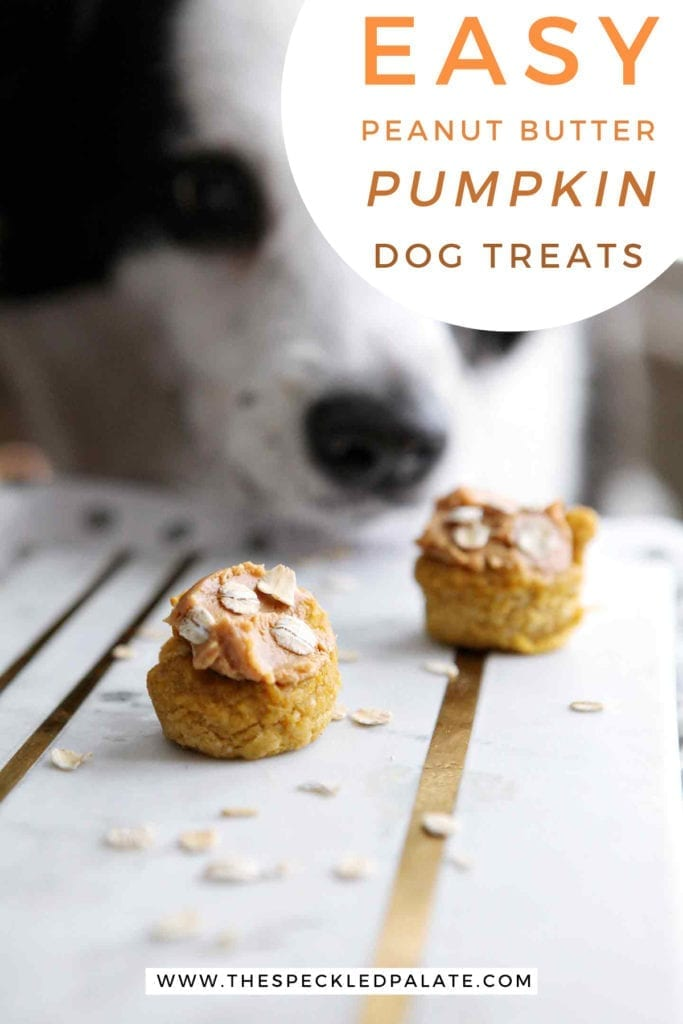 Two pumpkin pupcakes on a marble slab with a dog sniffing them with the text 'easy peanut butter pumpkin dog treats'
