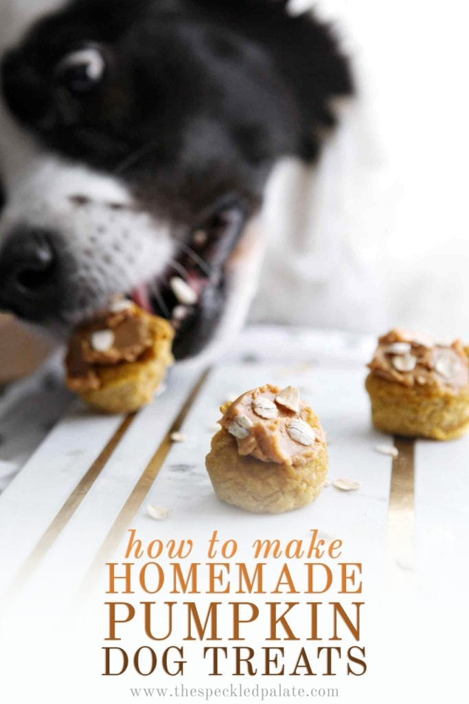 Three Peanut Butter Pumpkin Pupcakes on marble are eaten by a black and white dog with the text 'how to make homemade pumpkin dog treats'